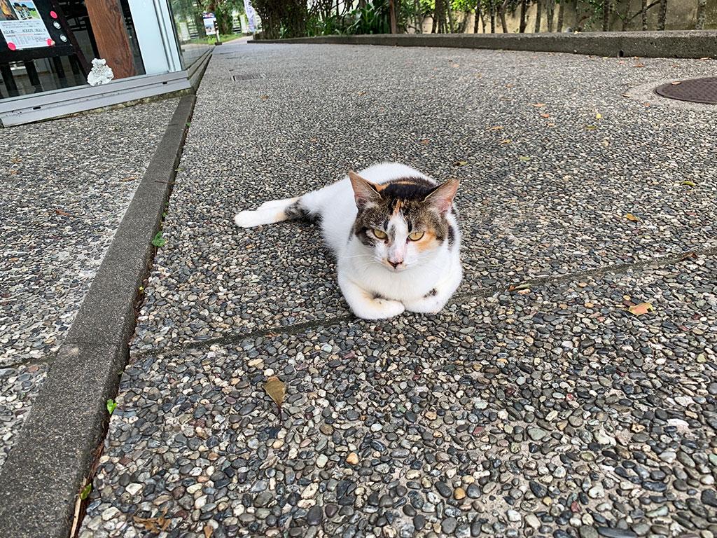 道中にいた地域猫