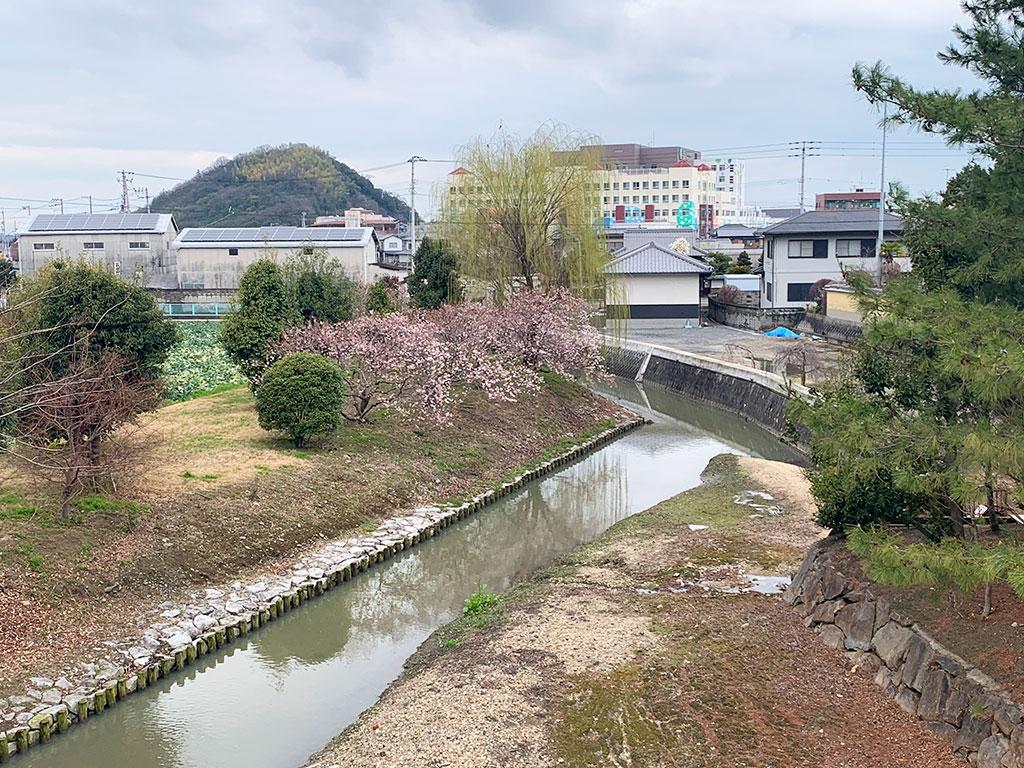 川沿いの涅槃桜01