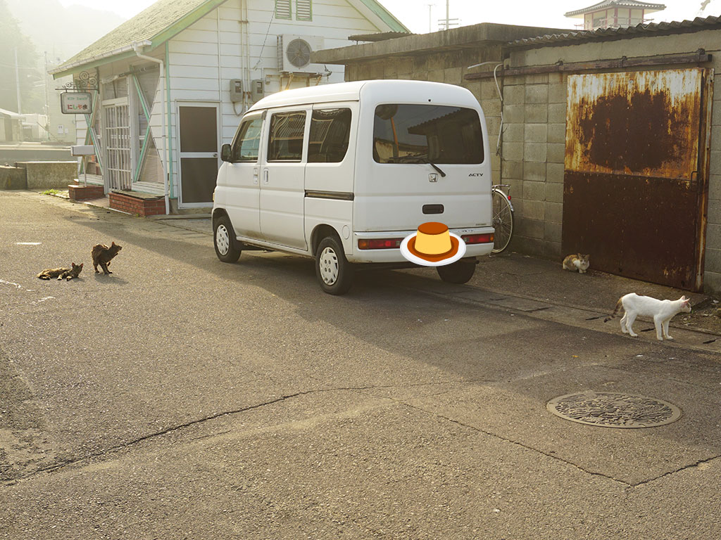 ギフトショップにしやま周辺にいた島猫の様子を撮影した写真