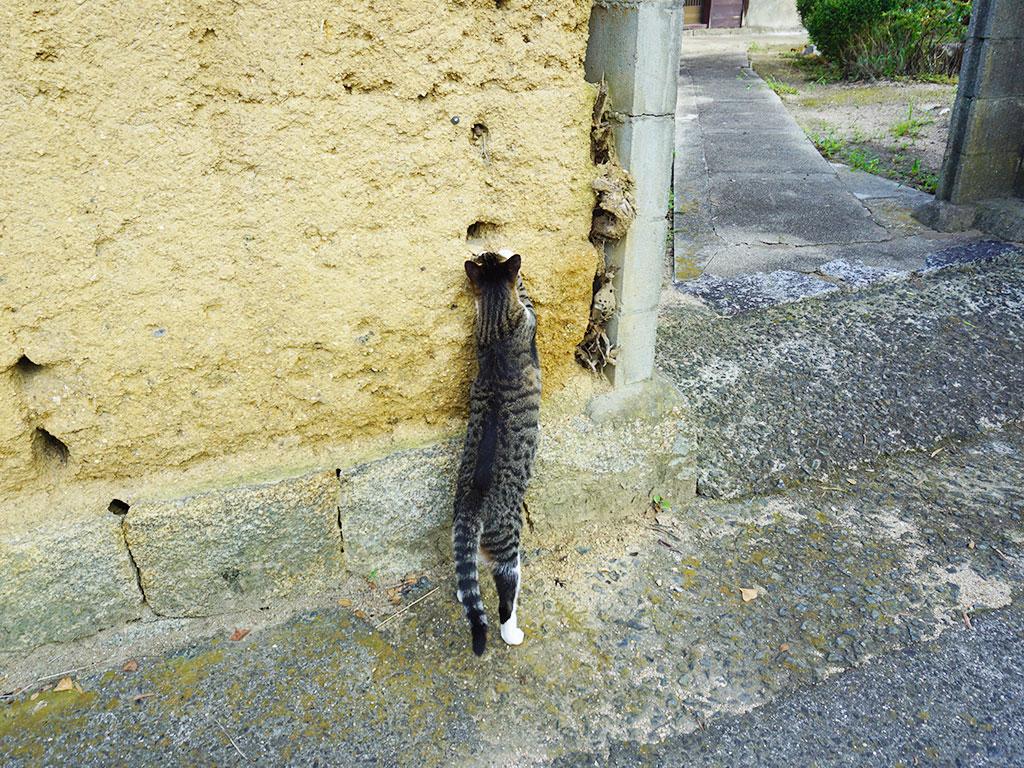 粟島のふれあいパーク周辺で出会った猫を撮影した写真