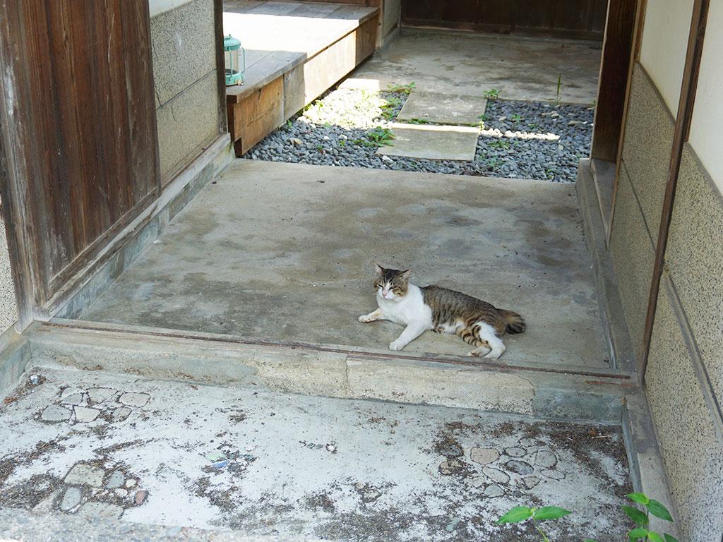 粟島の「Art canvas AWASHIMA」周辺で出会った猫を撮影した写真