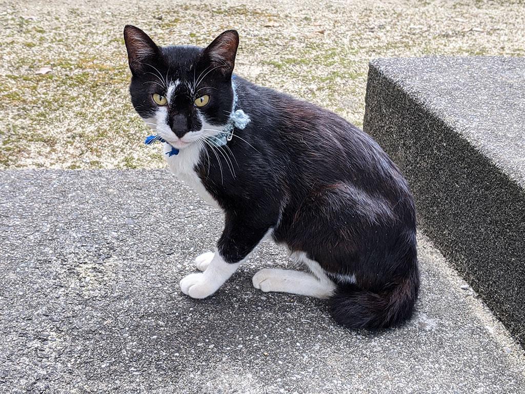 小烏神社の境内にいた飼い猫