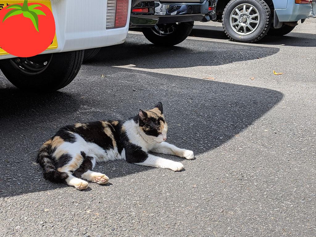 駐車場にいた猫01