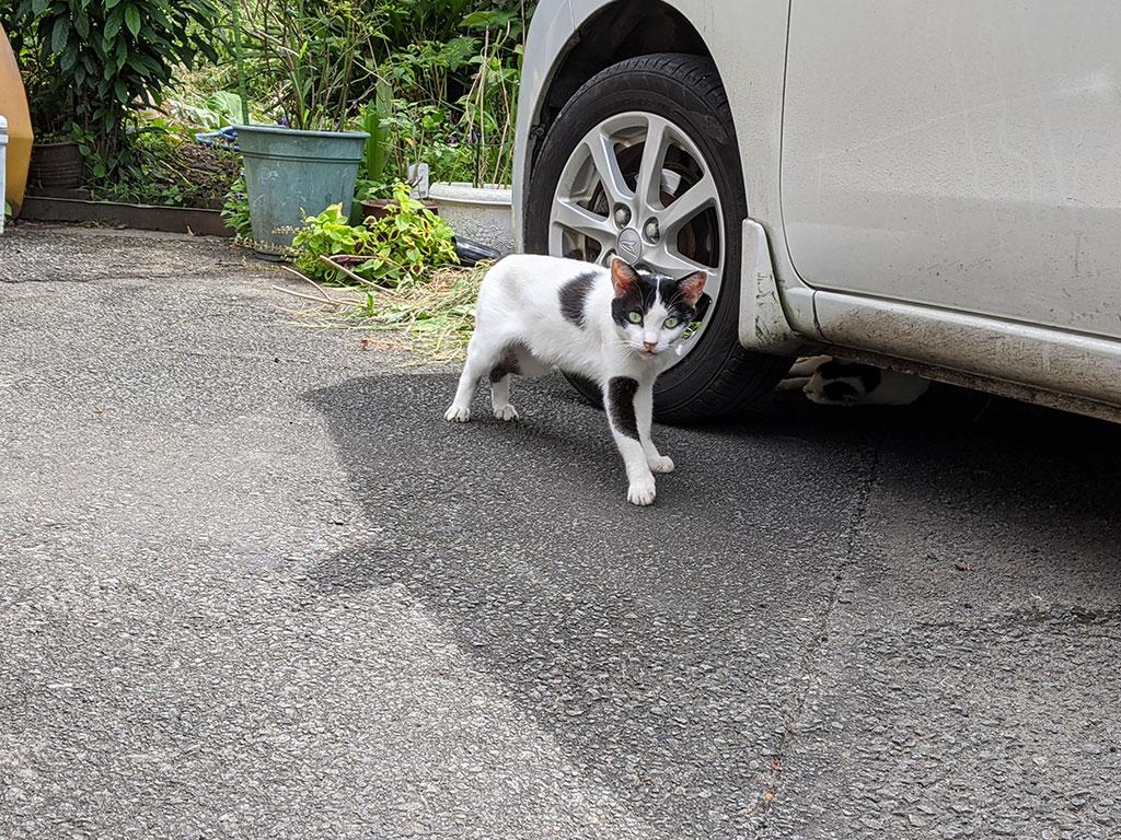 駐車場にいた猫02